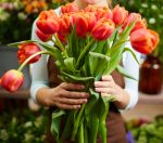 hands holding bunch of tulips